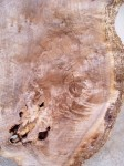 Black Walnut slab